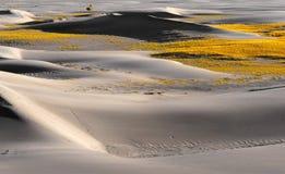 Droog gras in woestijn Royalty-vrije Stock Fotografie