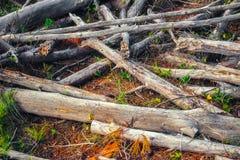 Droog hout in het bos stock afbeeldingen