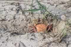 Droog karkas van dode vissen op droog bed van moerasland tijdens strenge droogte in Thailand Royalty-vrije Stock Afbeelding