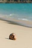 Droog kokosnotenzaad op het strand Stock Foto