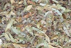 Droog Linden Leaves Tea Texture Royalty-vrije Stock Foto