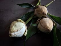 Droog Lotus Royalty-vrije Stock Foto's