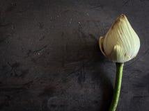 Droog Lotus Stock Foto's