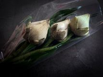 Droog Lotus Royalty-vrije Stock Afbeelding