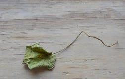 Droog lotusbloemblad op houten raad Stock Foto