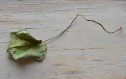 Droog lotusbloemblad op houten raad Royalty-vrije Stock Foto's