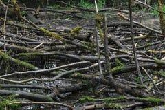 Droog moeras met de oude zwarte takken van de kleurenboom met mos liggend o royalty-vrije stock foto's