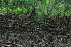 Droog moeras met de oude zwarte takken van de kleurenboom met mos liggend o stock afbeelding