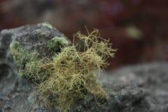 Droog mos Stock Foto