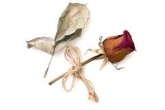 Droog nam en bloemblaadje dat op een wit wordt geïsoleerd toe Stock Foto's