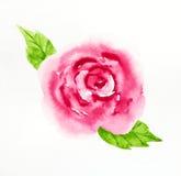 Droog nam met dalende bloemblaadjes op wit toe Royalty-vrije Stock Foto's