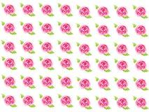 Droog nam met dalende bloemblaadjes op wit toe Royalty-vrije Stock Fotografie