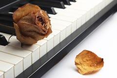 Droog nam met waterdalingen ligt toe op de piano Stock Foto's