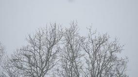 Droog in openlucht sneeuwende takken van de winterbos van bomenbovenkanten in Rusland het aardlandschap stock footage