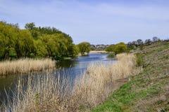 Droog riet en groene bomen langs rivier Royalty-vrije Stock Afbeelding