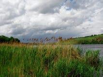 Droog riet op de rivier Royalty-vrije Stock Fotografie