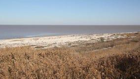 Droog riet op het strand stock videobeelden