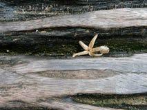 Droog ster gevormd blad of bloei daling binnen de barst van logboekbank met houten textuur in wijnoogst en grunge stijl royalty-vrije stock foto