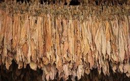 Droog tabaksblad stock afbeeldingen
