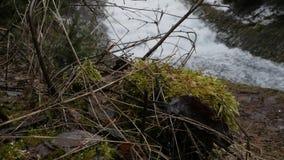Droog takken en mos op de achtergrond die van snel bewegende waterval tot reusachtig die schuim op rivier leiden in schilderachti stock video