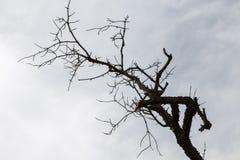 Droog vertakte boom onder blauwe hemel Stock Foto's