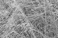 Droog verward gras op een donkere achtergrond Abstracte achtergrond, zwart-wit beeld Royalty-vrije Stock Afbeeldingen