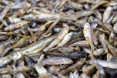 Droog vissen Stock Foto