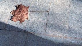 Droog zich het bruine esdoornblad bewegen glijdend op een steenstoep in zonlicht, exemplaarruimte stock footage
