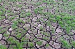Droogte, installaties die in droge aarde groeit Stock Foto's