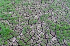 Droogte, installaties die in droge aarde groeit Stock Fotografie