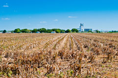 Droogte op het Landbouwbedrijf Royalty-vrije Stock Fotografie