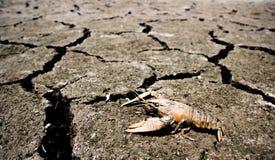 Droogte - rivier met het gestorven krab Globale verwarmen is opgedroogd die stock afbeeldingen