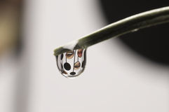 Drop. Eye and mouth in the drop Royalty Free Stock Photos