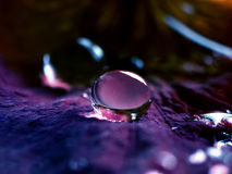 Drop. A drop of water on a petal Royalty Free Stock Photos