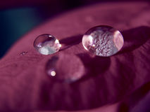 Drop 5. Macro drops of water royalty free stock images