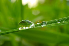 Drop. Rain drop on the blade of grass Royalty Free Stock Photography