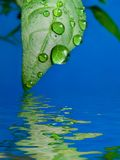 Drop. Green leaf with a water drop Stock Images