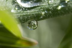 A drop, abstract, background, bright, clean, color, dew, drop, fresh, green, leaf, life, light, macro, natural, nature, rain Stock Images