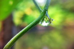Drop on branch Stock Image