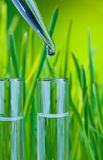 A drop of clean water in test tube. Test tubes filled with clean water with fresh spring green grass on background and new drop from dropper Royalty Free Stock Image