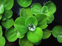 A drop of dew Stock Photos