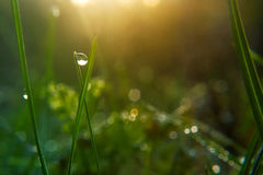 Drop of dew on blade of grass in early morning Stock Image