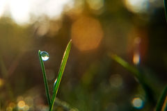 Drop of dew on blade of grass in early morning Stock Images