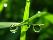 Drop of dew. On grass in fresh moring royalty free stock photo