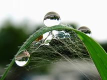 Drop of dew. On grass in fresh moring stock photos