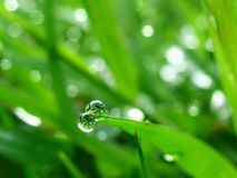 Drop of dew. On grass in fresh moring royalty free stock photography