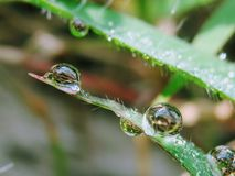 Drop of dew. On grass in fresh moring stock photo