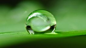 Drop of dew. On grass in fresh moring stock photography
