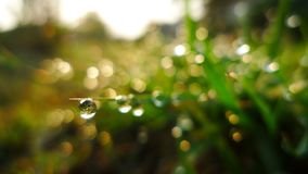 Drop of dew. On grass in fresh moring royalty free stock photos