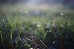 Drop of dew. On grass in fresh moring royalty free stock image